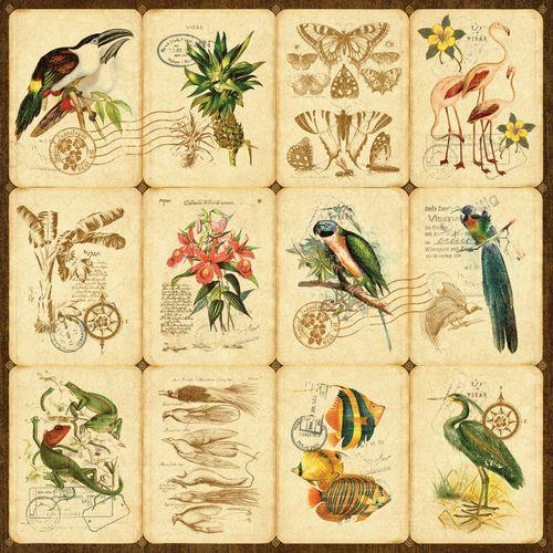 Botanica-frt-PR-copy