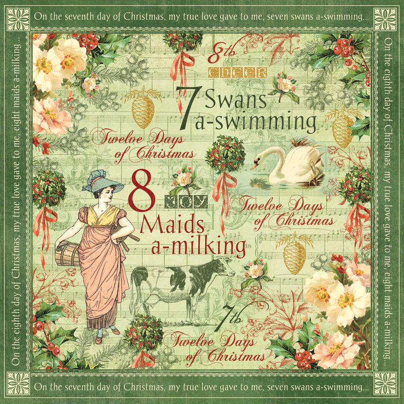 Swans-a-swimming-frt-PR