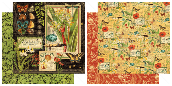 1 & 2 from Nature's Sketchbook, a new collection from Graphic45